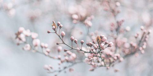 Benvenuta primavera, anche se…